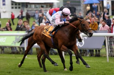 Nayel - A big priced winner at the York Dante meet